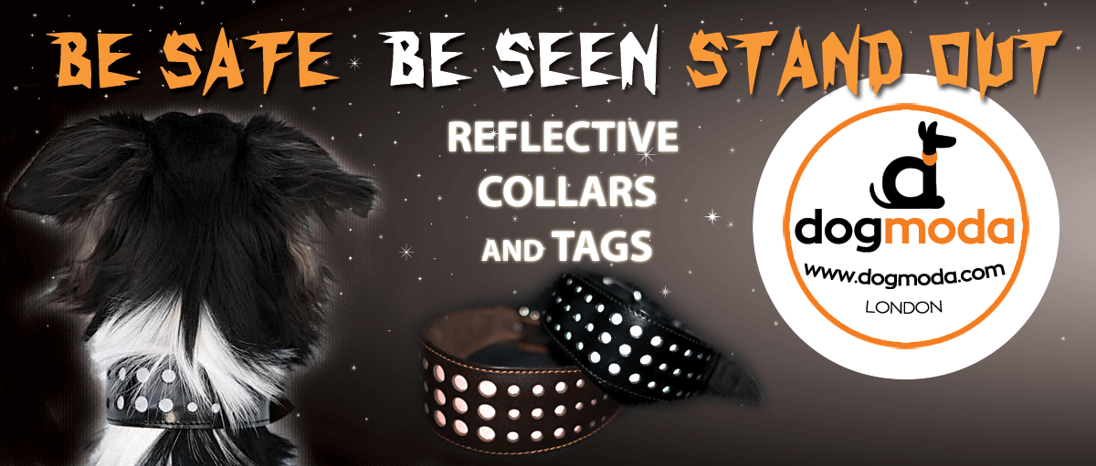 Reflective safety whippet & greyhound collars for dark winter nights from Dog Moda
