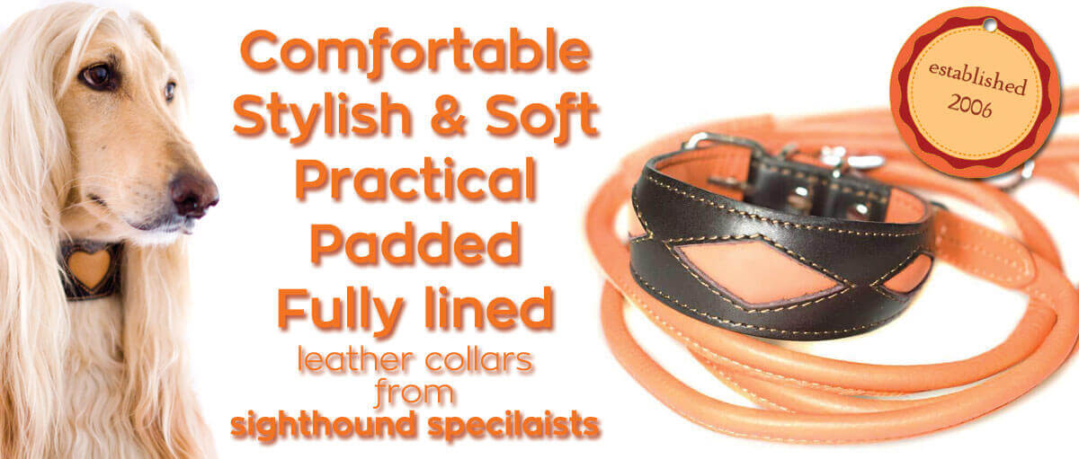 Soft padded leather sighthound collars designed & handmade in UK for Greyhounds, Whippets & other hounds