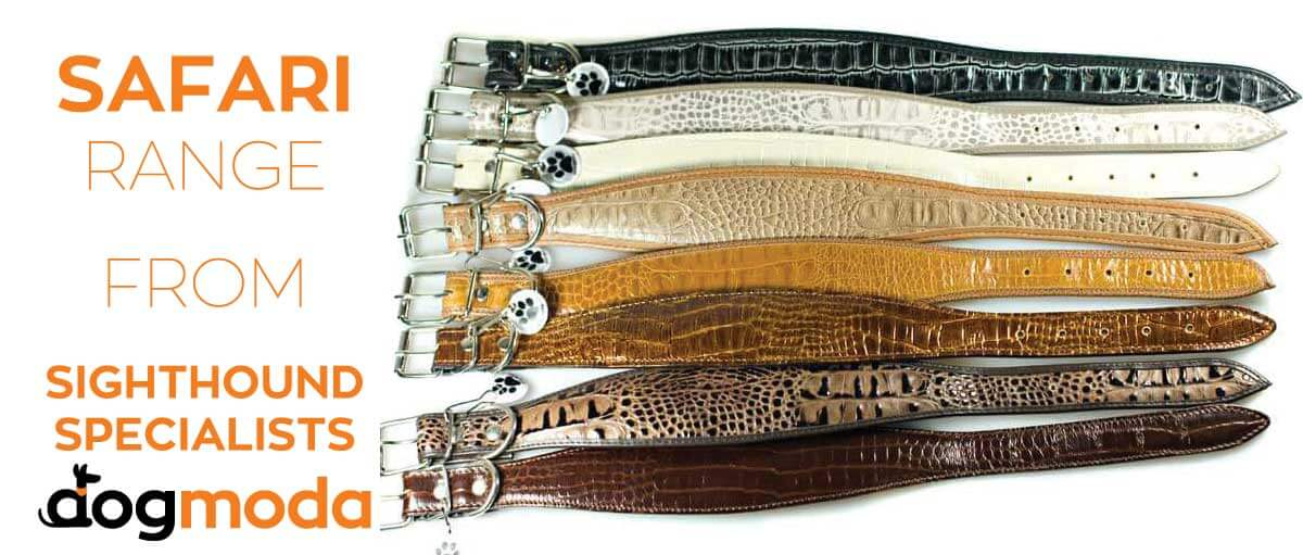 Safari Whippet / Greyhound collar range from Dog Moda UK - Sighthound collars specialist