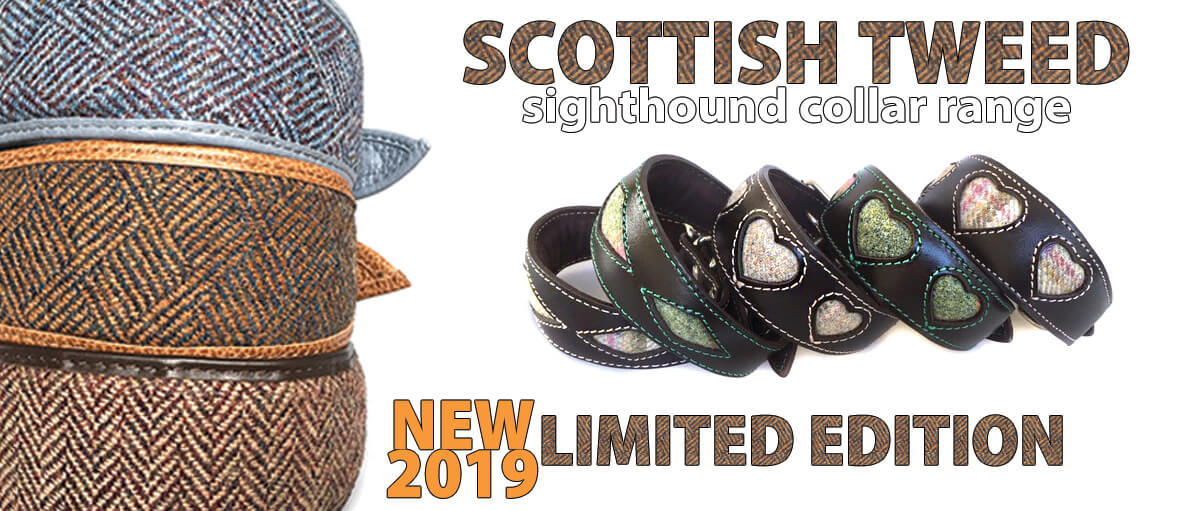 Scottish tweed hound collars for whippets and greyhounds from Dog Moda