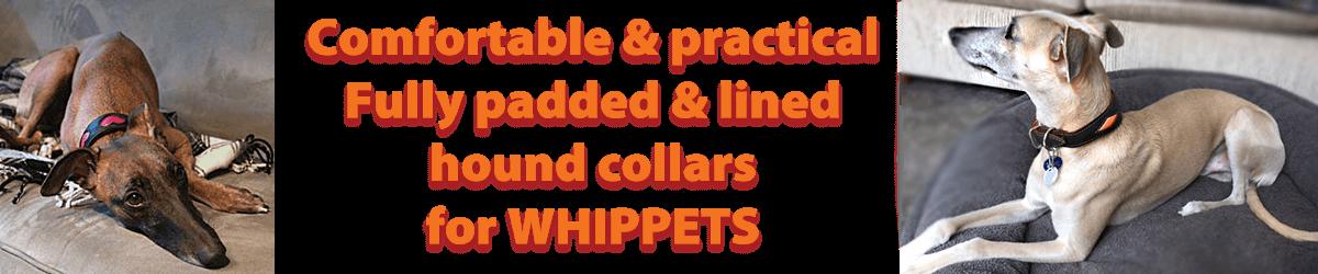 Whippet collars from Dog Moda