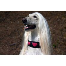 The very first pink fuchsia hearts collar worn by Aurora