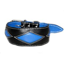 Blue rhombi hound collar is a popular choice for male sighthound