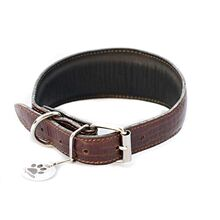 Amazonian alligator hound collar - fully lined and padded with soft leather
