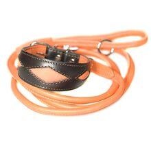 Orange rolled leads with Elegant orange collar to match