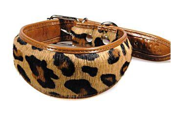 Savannah cat cowhide hound collar