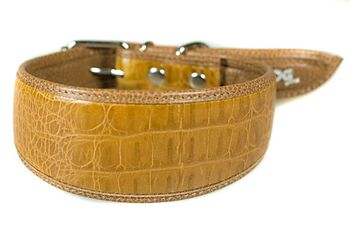 Jackal brown leather hound collar