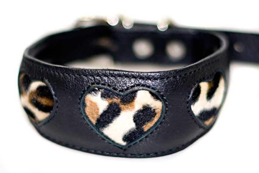 Leopard hearts hound collar in black