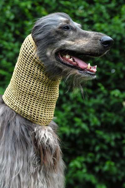 Crochet metallic snood in gold modelled by Dog Moda's own Head of Security Kazbek