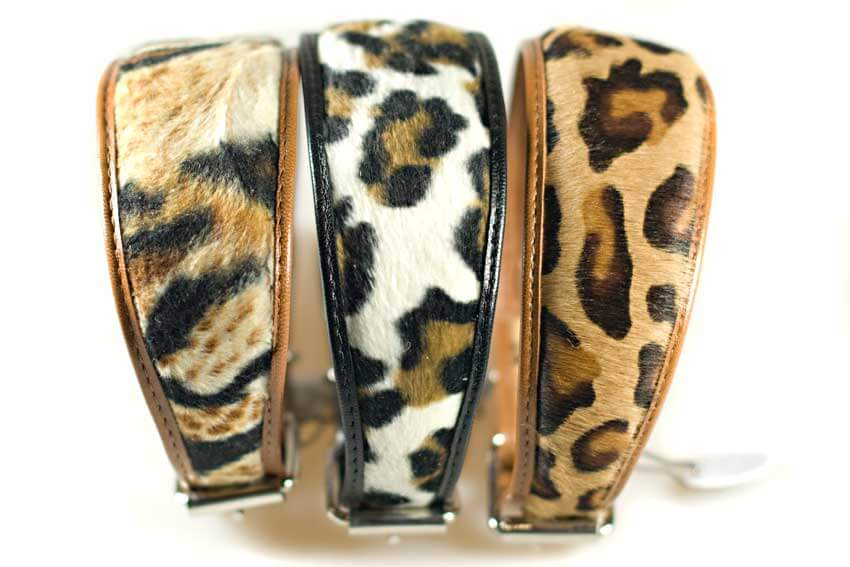 Animal print hound collars for whippets, greyhounds, lurchers, sighthounds