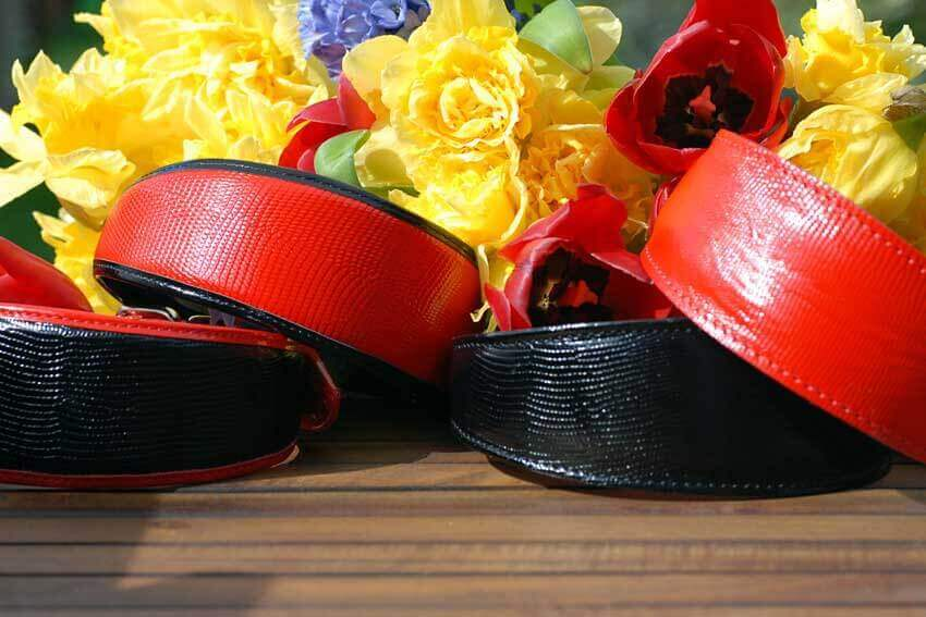 Classic combination of red and black greyhound and whippet collars