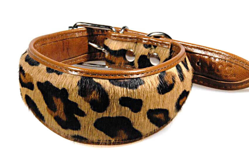 Savannah cat cowhide hound collar