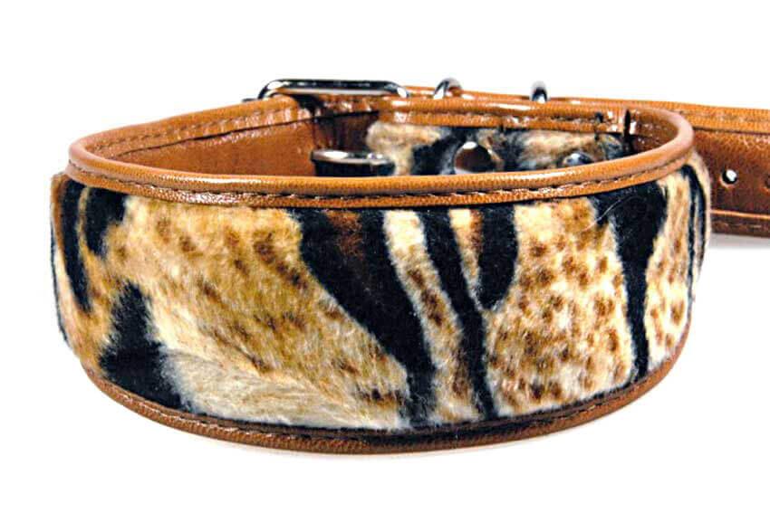 Amur tiger hound collar