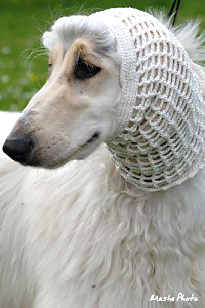 Afghan hound bitch in cotton crochet snood