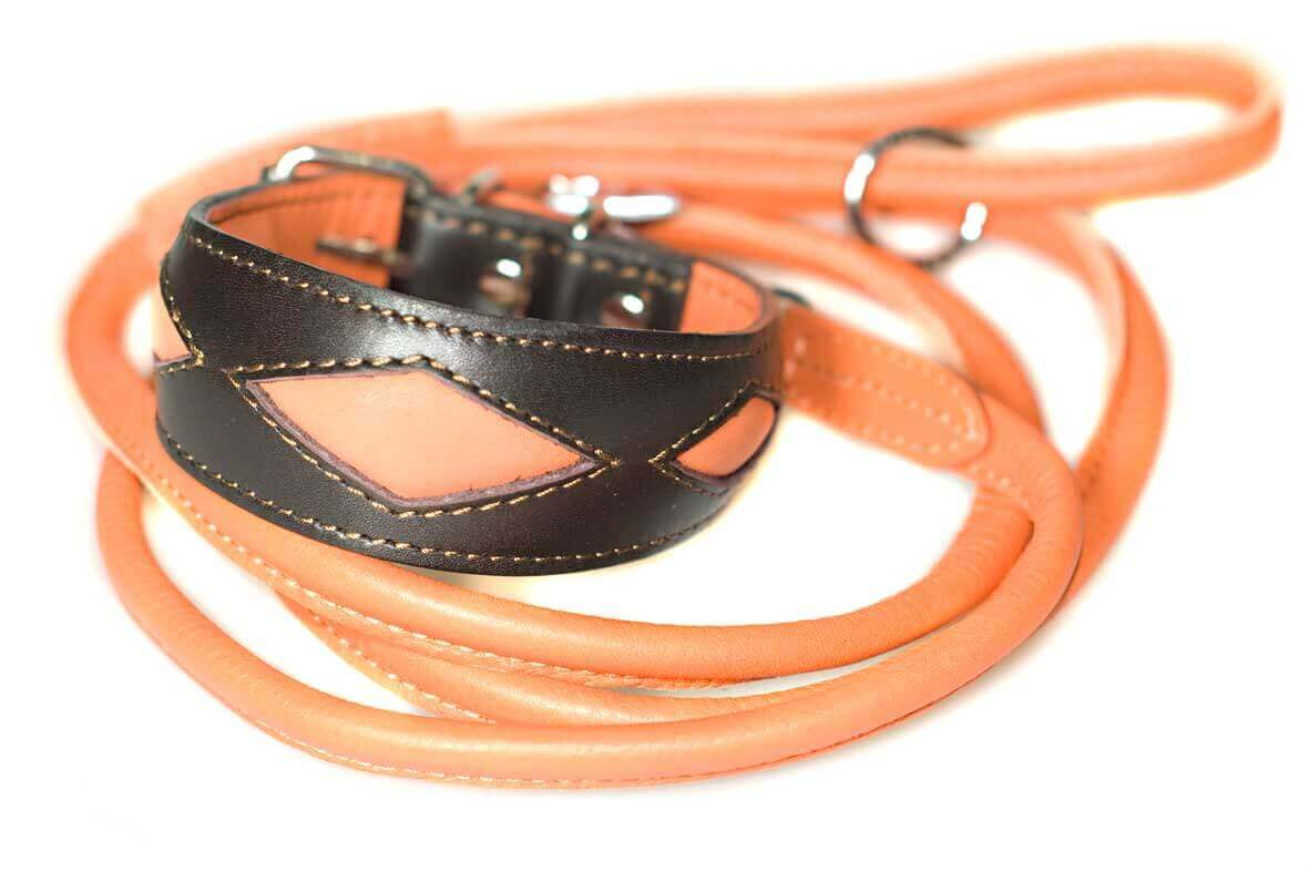 Orange rolled leads with Elegant orange collar to match