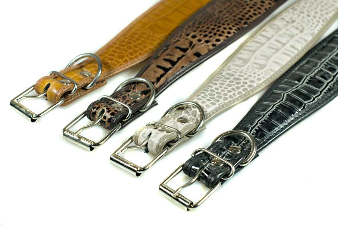 Strong buckles tested on our own Afghan hounds
