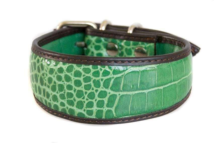Green crocodile leather whippet collar