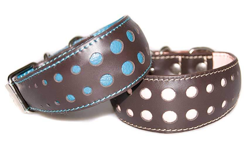 Small size whippet collars have two rows of colour dots