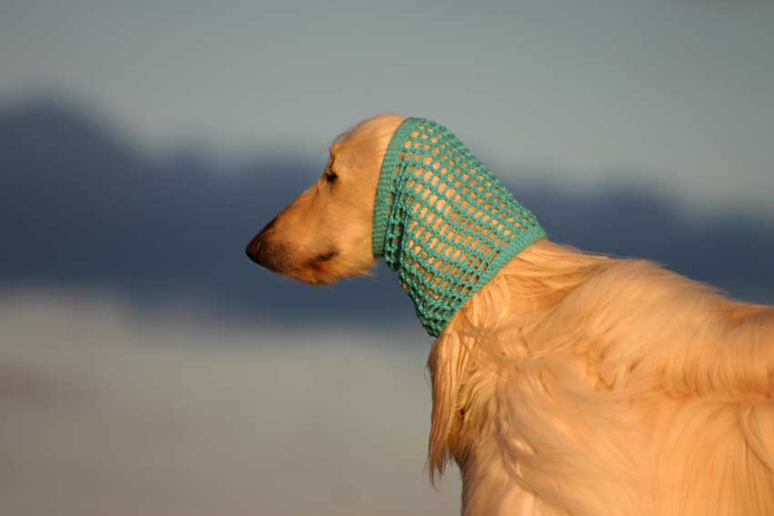 Crochet cotton snood in turquoise on an Afghan Hound