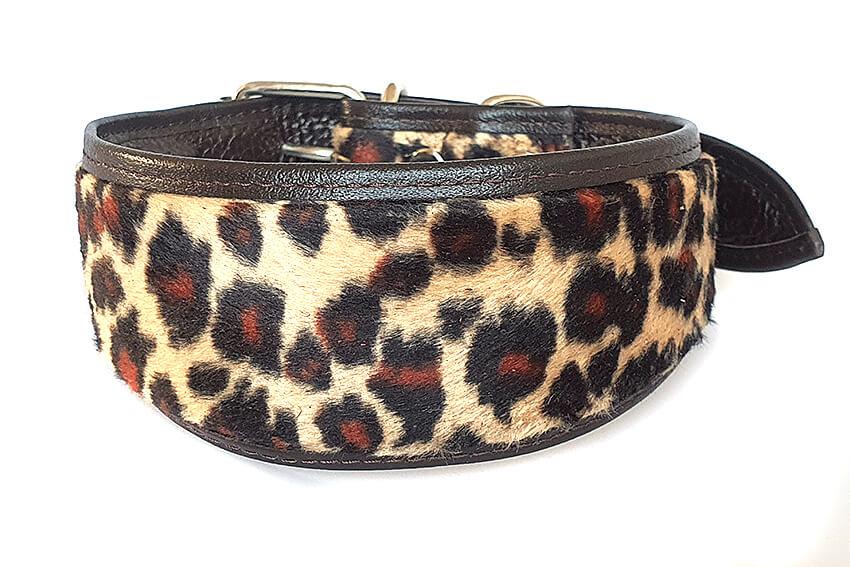 Altai leopard hound collar
