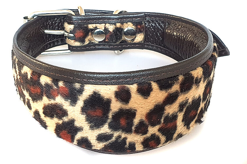 Gold Altai leopard whippet collar