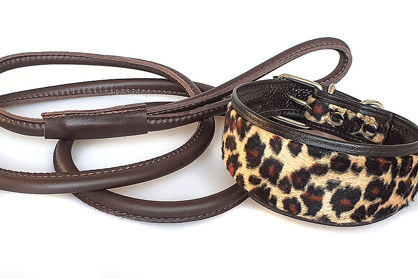 Brown rolled leather lead with Altai leopard hound collar