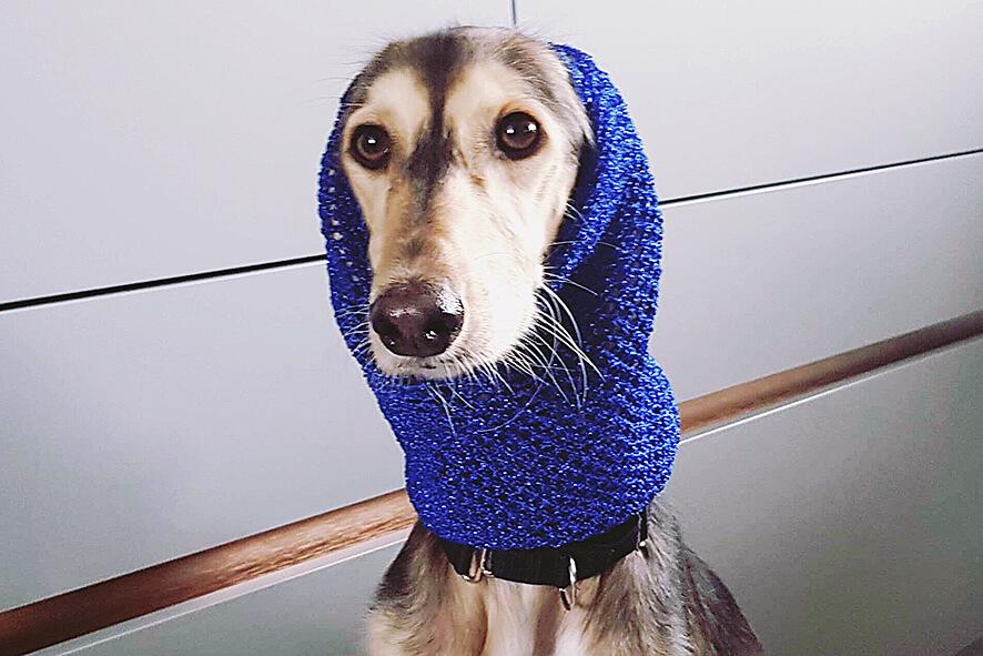 Saluki wearing a Dog Moda crochet snood
