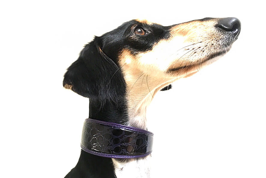 Purple indigo leather hound collar modelled by our smooth Saluki