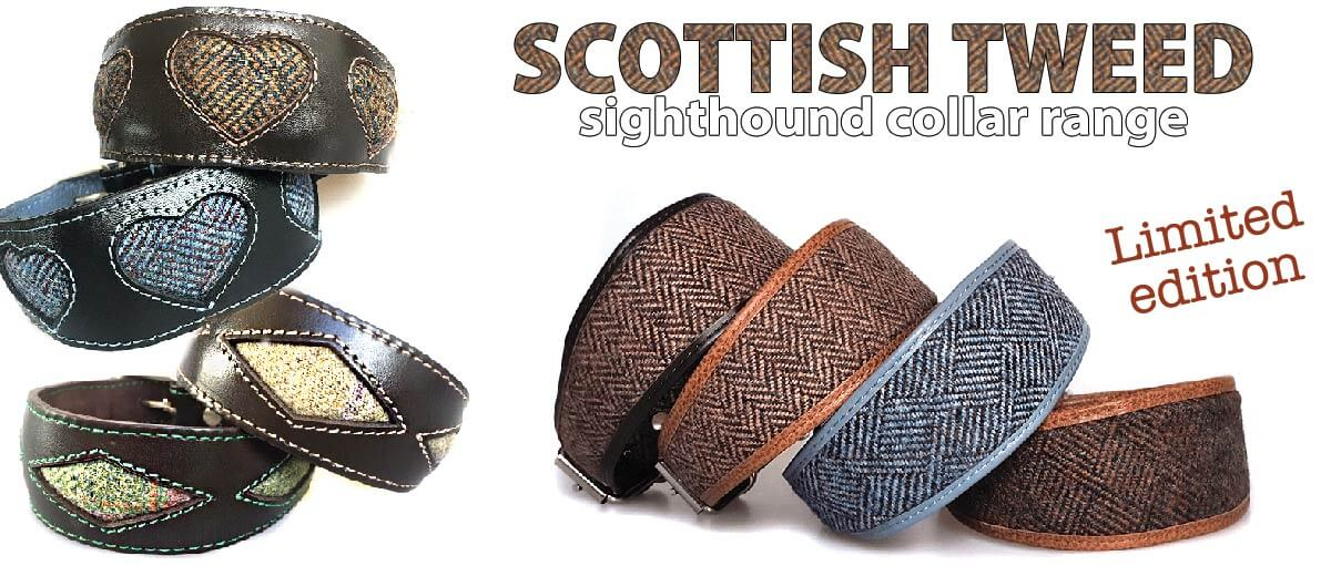 Scottish tweed hound collars for whippets and greyhounds