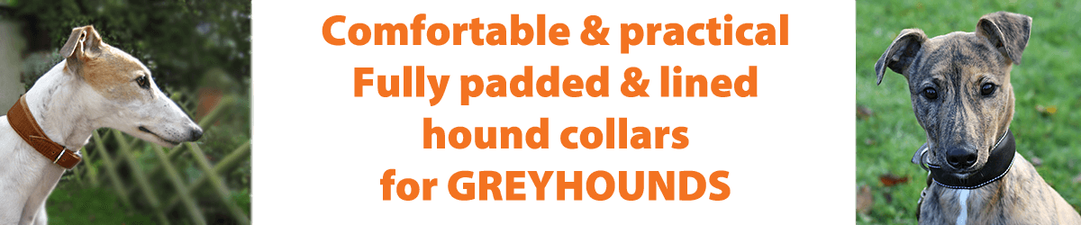 Greyhound collars from Dog Moda