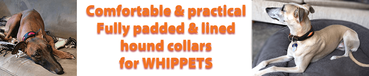 Soft padded leather collars for Whippets from Dog Moda