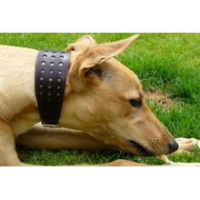 Size M Elegant Brown orchid collar modelled by a Greyhound