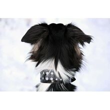 Night safety black leather reflective dog collar in daylight conditions