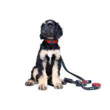 Red hearts hound collar on puppy - our original best selling hound collar design