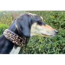 Altai modellign Alrai leopard collar