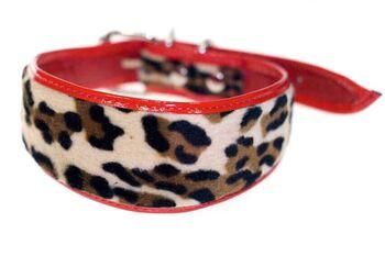 Red leopard hound collar