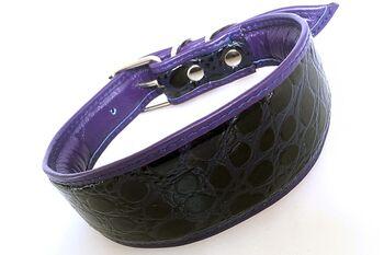 Purple indigo snake hound collar